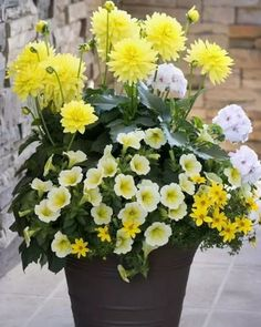 I love yellow flowers! HGTV HOME Plants - Gorgeous Gold™ annuals mix has huge dahlia, geranium and petunia flowers and adds instant curb appeal to your home Container Flowers, Flower Planters, Container Plants, Garden Planters, Container Gardening, Gardening Tips, Flower Pots, Organic Gardening, Flower Ideas