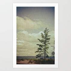 Lone Pine Art Print by Olivia Joy StClaire - $19.00