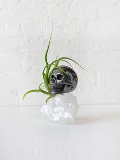Black Death Hematite Carved Skull on Apophyllite Crystal w/ Air Plant Garden Snake. $175.00, via Etsy.
