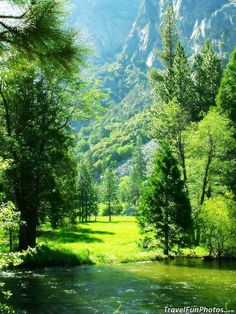 A Peaceful Meadow in Sequoia National Park, California – USA