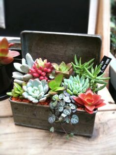 Succulent in repurposed planter