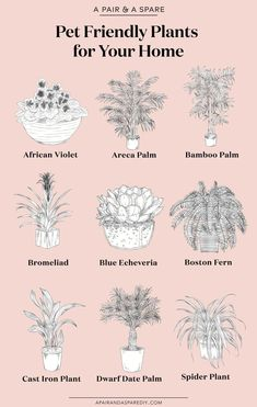 7 best houseplants for the best houseplants for the kitchen - Old House Journal MagazineBeautiful pet friendly houseplants Home Design - HOUSE PLANTS - beautiful .Beautiful pet friendly houseplants Home Design - HOUSE Indoor Garden, Garden Plants, Indoor Plants, Indoor Succulents, Hanging Plants, Cast Iron Plant, Decoration Plante, Bathroom Plants, Feng Shui Bathroom