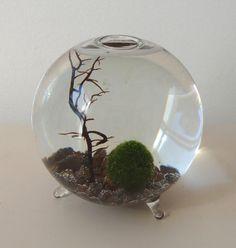 Marimo Moss Ball  The New Aquarium by PinkSerissa on Etsy, $18.00