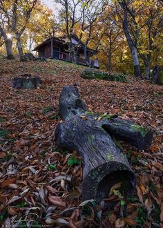 """Cabin in the woods - - Kissavos, Greece. 2015 - <i>Please view on black</i> - <i>You can find me also on my personal <a href=""""http://www.nikoloulis.wixsite.com/photo/"""">Website</a>, <a href=""""http://www.flickr.com/photos/nikoloulis/"""">flickr</a>, <a href=""""http://1x.com/member/nikoloulis"""">1x.com</a>, <a href=""""https://www.facebook.com/nikoloulis"""">facebook</a> or follow me on <a href=""""https://twitter.com/iNikoloulis"""">twitter</a>.</i>"""