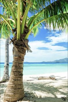 Pin By Gina Carrier On Dreaming Of The Beach Palm Trees Tropical Dream Vacations, Vacation Spots, Italy Vacation, Belle Image Nature, I Love The Beach, Photos Voyages, Tropical Beaches, Tropical Paradise, Paradise Travel