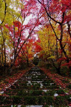 Fall in Yabakei Gorge, Nakatsu, Oita, Japan