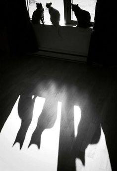 shadows: Chat Noir black cats, zwart/wit katten, poezen, schaduw, black and white Shadow Photography, Cat Photography, Silhouette Photography, Crazy Cat Lady, Crazy Cats, Silhouette Fotografie, Shadow Silhouette, Silhouette Painting, Photo Chat