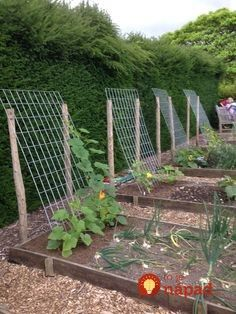 idea for squash, zucchini, cucumbers … – Plants and small vegetable garden – – diy garden landscaping Backyard Vegetable Gardens, Veg Garden, Garden Trellis, Outdoor Gardens, Summer Garden, Diy Trellis, Trellis Ideas, Bean Trellis, Vertical Vegetable Gardens