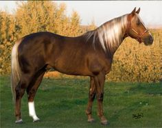 Crago Stallions - Fire On Bug
