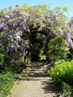Wisteria Arch... Breath taking.  Love it, don't know where I'd put it... But love it