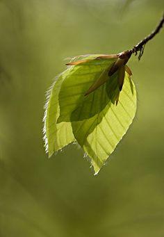 Resultado de imagem para leaf