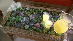 Watch Martha Stewart's Learn & Do: How to Make a Terrarium Coffee Table Video. Get more step-by-step instructions and how to's from Martha Stewart.