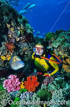 Scuba Diver with tropical fish photo