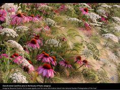 Internacional Garden Photographer of the Year 2014