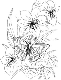 Butterfly Coloring Pages 38 | Free Patterns | Yarn