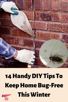 Daily Cleaning, House Cleaning Tips, Easy Home Upgrades, House Bugs, Diy Pest Control, Homestead Farm, Amazing Life Hacks, Home Fix, Diy Home Repair