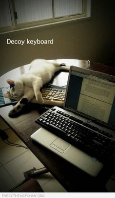 I so need to do this! Smokey always gets on my laptop keyboard...so annoying