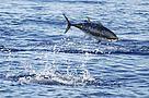 Il mediterraneo ha un patrimonio di biodiversità unico / ©: Frédéric BASSEMAYOUSSE / WWF-Mediterranean