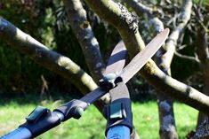TOP 5 BEST TELESCOPIC TREE PRUNERS FOR HYDRANGEA | COMPARISON AND BUYERS GUIDE