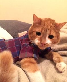 рубашка для кота, шьем и вяжем