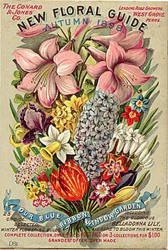 Vintage Illustrations The Conyard and Jones' Co. New Floral Guide, Autumn 1898 - vintage seed catalog - Images Vintage, Art Vintage, Vintage Prints, Vintage Posters, Garden Catalogs, Seed Catalogs, Flower Catalogs, Seed Art, Illustrations Vintage