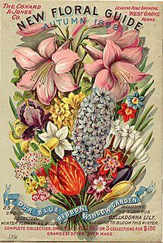 Vintage Illustrations The Conyard and Jones' Co. New Floral Guide, Autumn 1898 - vintage seed catalog - Images Vintage, Art Vintage, Vintage Prints, Vintage Posters, Vintage Labels, Vintage Ephemera, Garden Catalogs, Seed Catalogs, Flower Catalogs