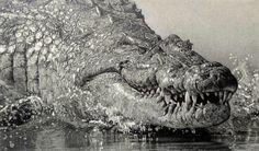pencil-art-crocodilo-02