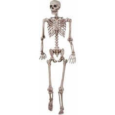 Lifesize Pose N Stay Skeleton - Add an authentic note to your Halloween decor when you place this life size Pose N Stay skeleton behind a door, by the fireplace or anywhere you want Halloween Skeleton Decorations, Halloween Scene, Dog Halloween, Spirit Halloween, Halloween Ideas, Halloween Party, Posable Skeleton, Dog Skeleton, Haunted Graveyard