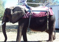 Nosey Needs You! Urge the FWC to Revoke Circus's Captive Wildlife Permits | Action Alerts | Actions | PETA