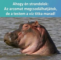 Hippopotamus, Marvel, Pictures, Animals, Black, Photos, Animales, Animaux, Black People