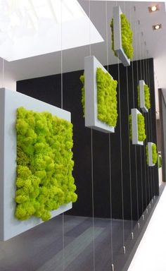 With the increase in the trend of vertical garden in home decoration, moss wall art and graffiti are also favored. Vertical gardens & moss walls are the best home decoration trick to turn out your home into a miniature farm. Wall Design, House Design, Display Design, Chicken Wire Frame, Moss Wall, Green Architecture, Vertical Gardens, Vertical Planter, Plant Wall