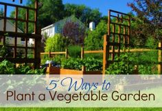 5 Ways to Plant a Vegetable Garden