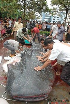 Do NOT go noodling in the Guangdong reservoir,China