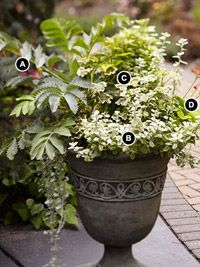 Dramatic Foliage Container Garden