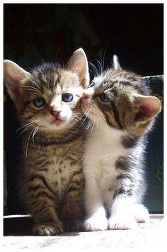 kittens!!!!!!!!!!!!!!!!!!!!!!!!!!!!!!!!!!!!!!!!!!!!!!!!!!!!!!!!!!!!!