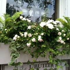 Window box in white. White flowers simple, tasteful with ferns and ivy.