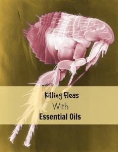 Killing fleas with essential oils