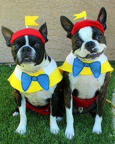 Boston Terrier Tweedledee & Tweedledum Dog Halloween