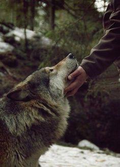 wolf friend