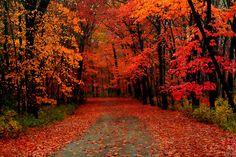 Greenfield Park Trail | West Allis, Wisconsin | Flickr