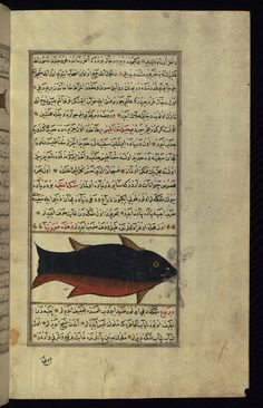 A huge fish Wonders of Creation  by Qazwīnī 1293 was translated to Turkish in 1717  completed by Rūzmah-ʾi Nāthānī - W659