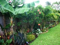 DIY Tropical Fence Border Garden: UPDATE. Just a few weeks have passed, and you can see the difference! http://www.kickshawinc.com/category/articles/home-and-garden/diy-tropical-fence-border/