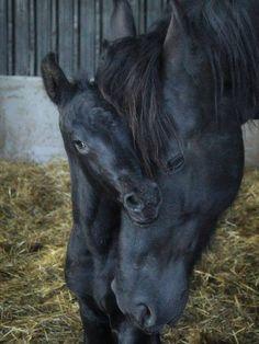 "sevalin: ""#HORSE# """