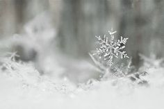 Carla Dyck Photography: December 2012