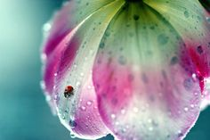 Rainy day photography inspiration: 35 beautiful examples of rain photography via smashingmagazine.com