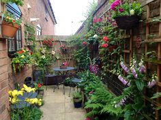 Summer colour in small courtyard