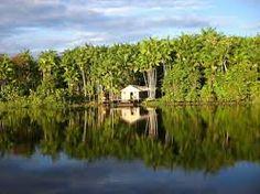 Resultado de imagem para rio amazonas