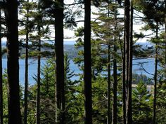 A view of Seal Harbor through the trees from Martha Stewart's terrace.