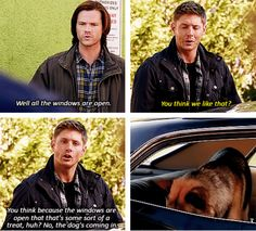 [SET OF GIFS] 9x05 Dog Dean Afternoon. Haha I loved this episode. It was hilarious. In what other show would a guy become a dog basically and check out a poodle?