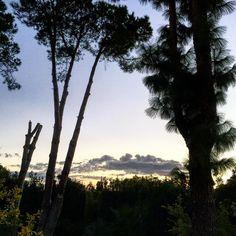 #anochecer #anochece#anocheciendo #anocheceres #guadalmina #malaga #marbella #andalucia #españa #spain #otoño #november #noviembre #surdeespaña #sur